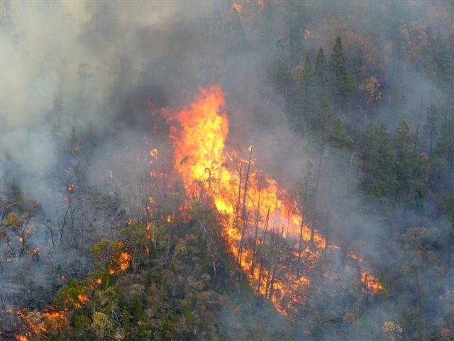Billo Fire 2006
